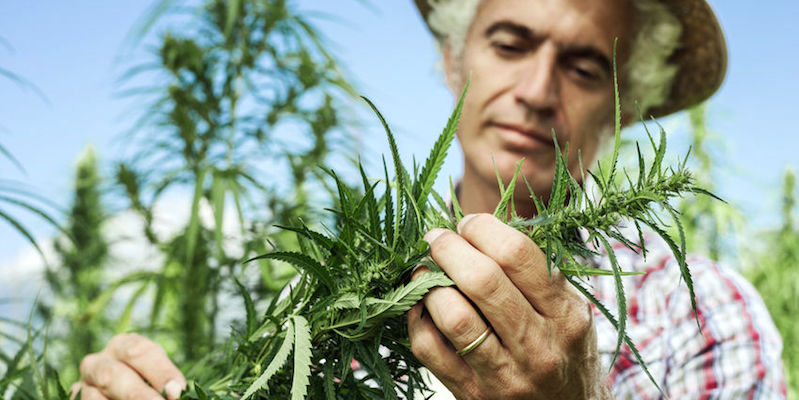 What Farm Bill Means for CBD in Louisiana